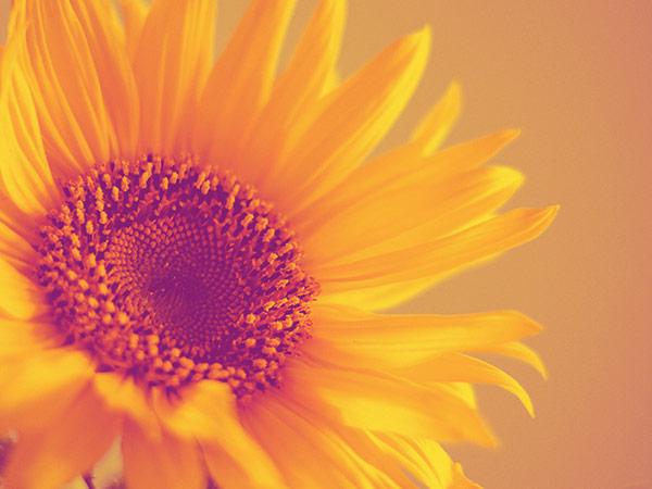 6 Blumenmuster für den sommerlichen Retrolook